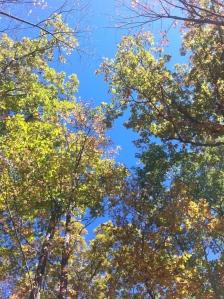 fall blue skies