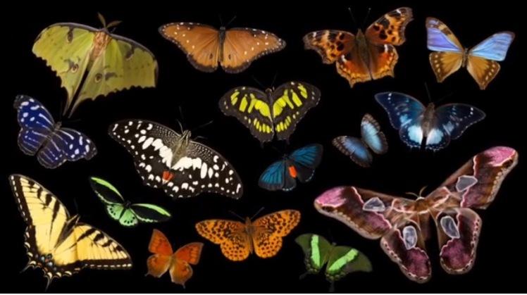 butterflies-joel-sartore